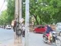 Hàng loạt cột điện án ngữ trên nhiều tuyến giao thông thuộc phường Phú Lương, quận Hà Đông