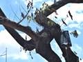 Hà Nội: Truyền dịch cứu hàng cây sưa quý hiếm trên đường Nguyễn Văn Huyên