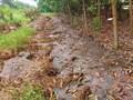 Tái diễn tình trạng đổ trộm phân bùn bể phốt trên Đại lộ Thăng Long