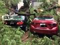 Bão số 4 khiến cây đổ, tắc cứng trên khắp đường phố Hà Nội