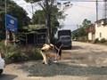 Cảnh sát giao thông san lấp 'ổ trâu' đảm bảo cho người dân đi lại an toàn