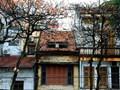 Tháng Ba, đường phố Hà Nội đẹp ngỡ ngàng trong tiết giao mùa