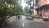 Danh tính nạn nhân vụ đổ cây gây chết người trên phố Trần Đăng Ninh