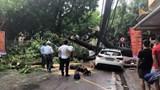 Mưa lớn ở Hải Phòng, cây đổ khiến 1 người bị thương
