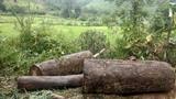 Lật xe chở gỗ lậu ở Kon Tum, người đàn ông bị đè chết