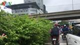 Hà Nội: Hoa giấy mọc um tùm, che khuất tầm nhìn phương tiện giao thông