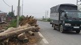Nguy hiểm từ những đống gỗ tại tỉnh lộ 421A