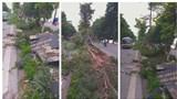 Cây xanh gãy đổ cản trở giao thông trên đường Nguyễn Hữu Thọ, nghi do ô tô tông