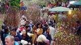 Hà Nội cấm đường để tổ chức chợ Hoa Xuân trên phố cổ từ ngày mai