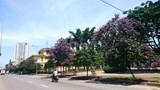 [Ảnh] Con đường tràn ngập màu tím hoa bằng lăng tại Hà Nội