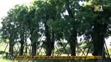 Thực trạng việc di chuyển cây xanh thi công đường sắt đô thị Nhổn – ga Hà Nội