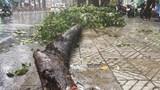 Mưa lớn khiến cây tét nhánh đè gãy tay người đi đường