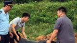 Tiêu hủy hơn 3 tấn lòng lợn sấy khô, phạt chủ xe 7,5 triệu đồng