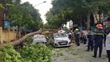 Hà Nội: Cây xà cừ đổ đè trúng 3 ô tô trên đường Trần Hưng Đạo