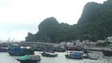 Tạm dừng cấp phép tàu thuyền trên địa bàn tỉnh Quảng Ninh