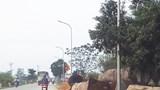 [Điểm nóng giao thông] Mất an toàn giao thông vì gỗ