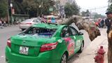 Nghệ An: Tài xế taxi và hành khách hú vía khi cành cây bất ngờ rơi xuống nóc xe