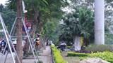 Vì sao Hà Nội di chuyển hàng loạt cây xanh dọc ven sông Tô lịch?