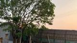 Tai nạn giao thông mới nhất hôm nay 2/4: Xe chở gỗ dăm lao thẳng vào nhà dân bên đường