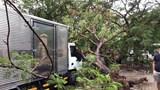 TP Hồ Chí Minh: Cây phượng bật gốc trơ trụi, đè trúng xe tải