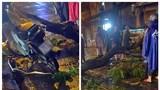 TP Hồ Chí Minh: Cây xanh gãy cành, đè tử vong người đi xe máy