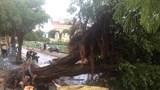 Hà Nội: Nam thanh niên bị cây đổ đè chết ở đường ven Hồ Tây