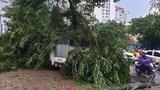 [Ảnh] Hà Nội: Mưa gió khủng khiếp, cây đổ hàng loạt khiến 1 người thiệt mạng