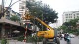 Hà Nội: Thành lập tổ cơ động ứng phó cây xanh gãy đổ do bão số 2