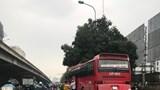"""Xử lý kiến nghị về tình trạng """"xe dù, bến cóc"""" trên tuyến Hà Nội - Quảng Ninh"""