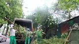 Hà Nội: Tăng cường hệ thống chiếu sáng, cây xanh, đảm bảo an toàn giao thông mùa mưa bão