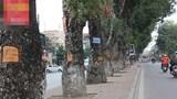 Vụ tai nạn chết người trên đường Láng: Cần tìm nhân chứng