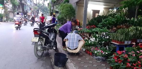 lon xon cho hoa cay canh tren duong hoang hoa tham