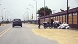 Hà Nội: Phơi thóc trên đường gây mất an toàn giao thông