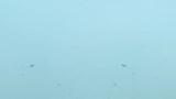 Clip: Thanh niên say rượu, ngả xe giữa cầu Vĩnh Tuy rồi nhảy múa