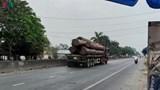 """Tái xuất hiện đoàn """"xe vua"""" chở gỗ kém an toàn trên Quốc lộ 1A"""