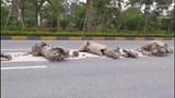 Xuất hiện lượng lớn bùn đất trên Đại lộ Võ Nguyên Giáp
