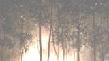 Hà Nội: Báo động hành vi đốt lửa gây cháy thảm cây xanh trên các tuyến đường lớn
