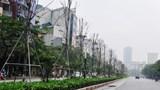 Thay thế cây phong trên phố Nguyễn Chí Thanh - Trần Duy Hưng: Hai bài học từ một sự việc