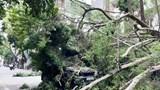 Hà Nội: Cây xanh đổ gục chắn ngang phố Lê Quý Đôn