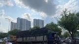 Xe tải tông gãy loạt cây xanh trên đại lộ Võ Văn Kiệt