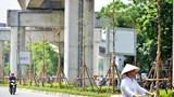 Hà Nội trồng, cải tạo hệ thống cây xanh dưới hạ tầng đường sắt Cát Linh - Hà Đông