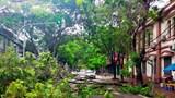 Bão số 2 tại Hải Phòng: Một số cây xanh gãy đổ, không xảy ra tình trạng ngập lụt