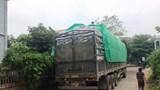 Báo động tình trạng xe tải gia tăng trong mùa dịch