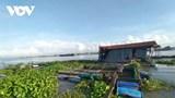 Sà lan tông chìm bè, 10 tấn cá thoát ra sông Tiền