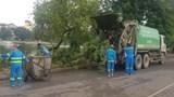 Hà Nội cắt tỉa cây xanh phòng mưa bão