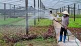 Hà Nội: Hỗ trợ, kết nối tiêu thụ nông sản và thực phẩm từ Vùng 2, Vùng 3 vào Vùng 1