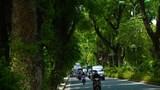 """Những con phố trở thành """"thiên đường"""" giữa nắng hè Hà Nội"""
