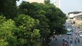 """Đường phố Hà Nội """"dễ chịu"""" nhờ cây xanh đa dạng"""